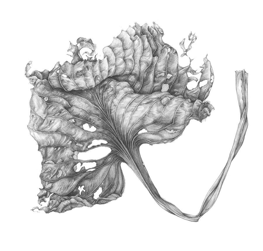 Workshop kennismaken met botanisch tekenen