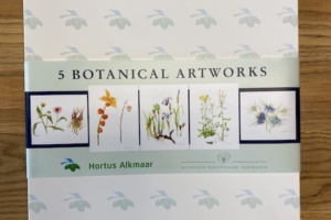 5 Botanical Artworks in Box #1